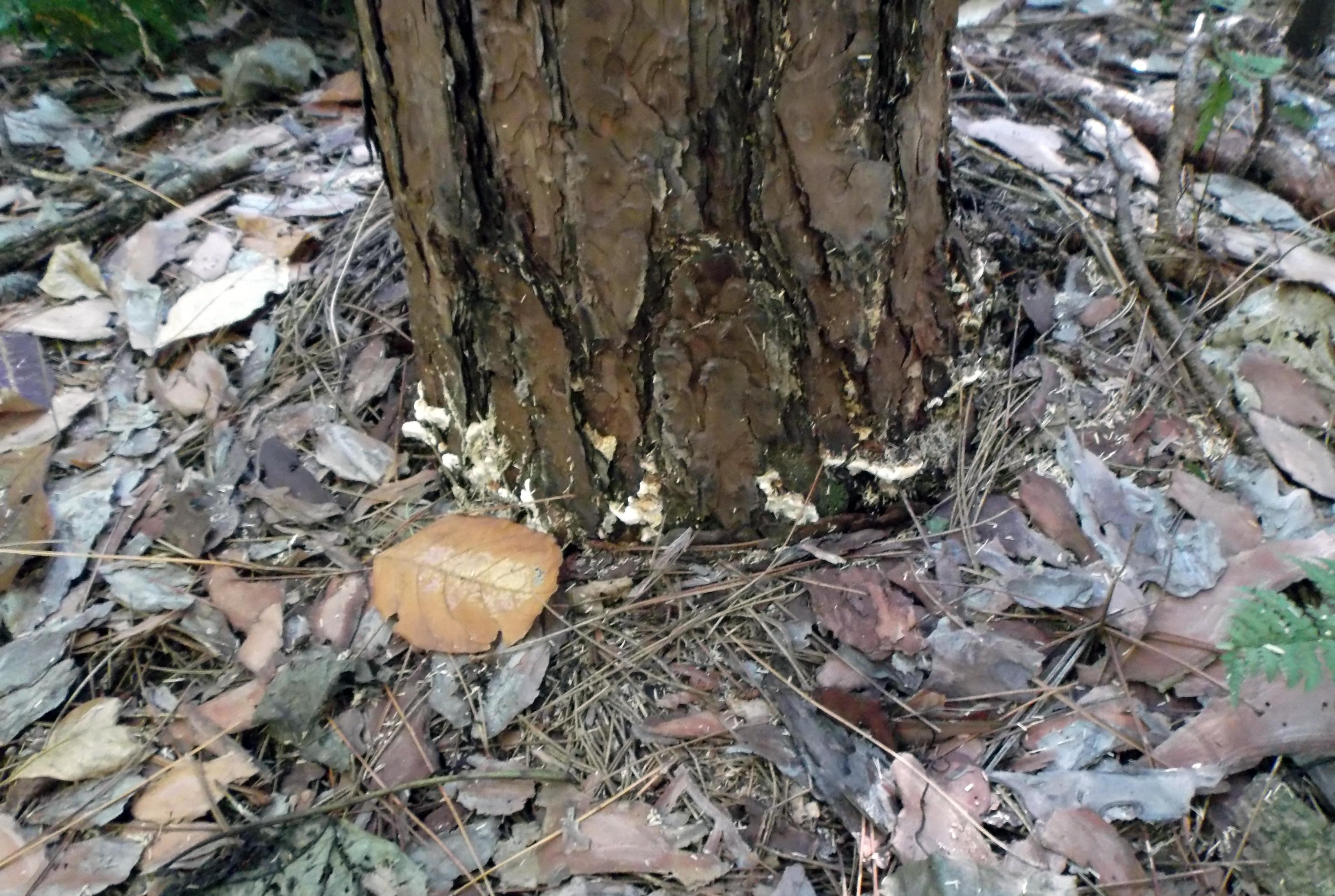 Pests image