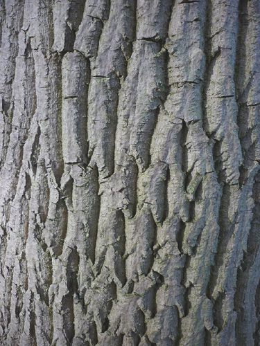 Bark image